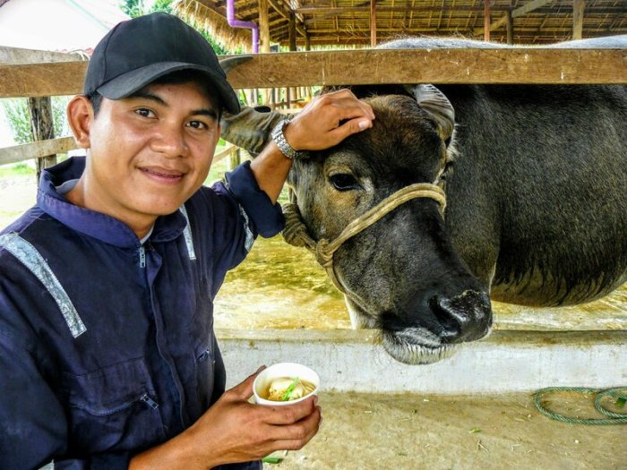Chit Sisanom stands with Lola the buffalo and a cup of ice cream at Laos Buffalo Dairy.