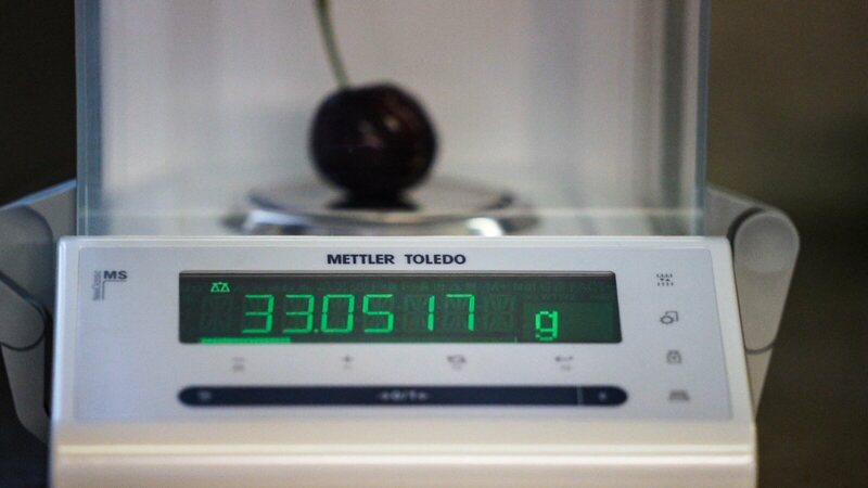 The weight of the winning cherry (33 grams) measured by a high-powered scale.