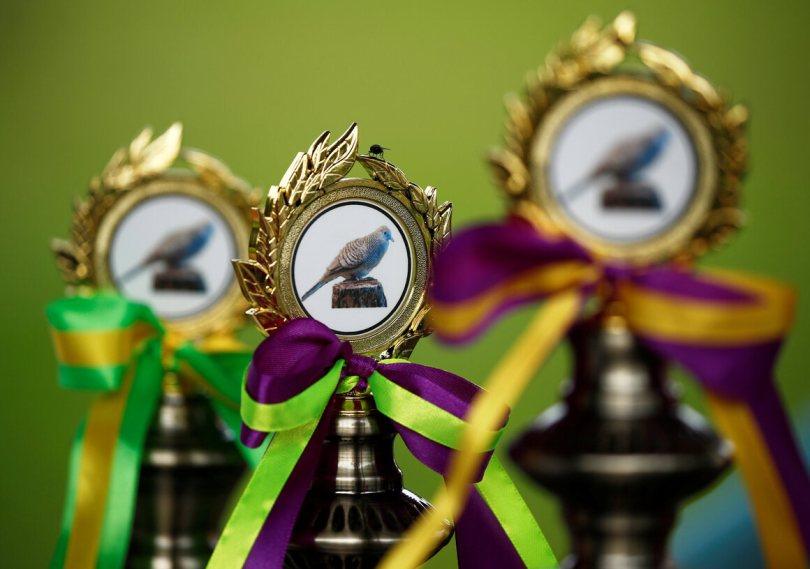 Trophies for a Kebun Baru birdsinging competition.
