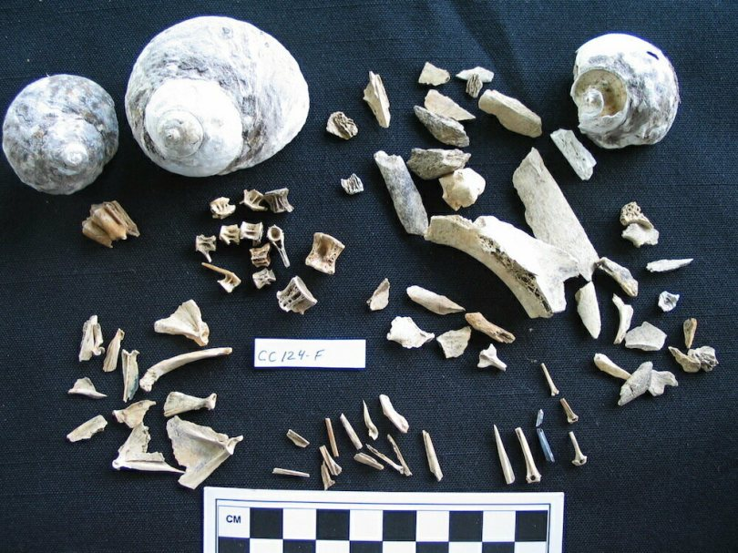 During excavations, archaeologist Diane Wallman unearthed bones and shells in Martinique, evidence of past meals.
