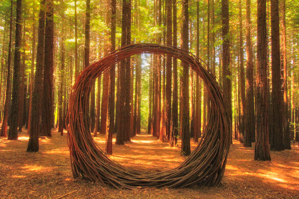 redwood forest tree art