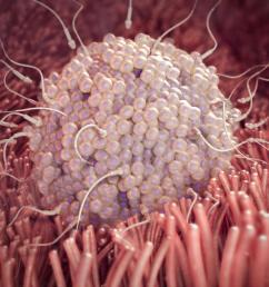 fetal development diagram conception [ 1024 x 768 Pixel ]