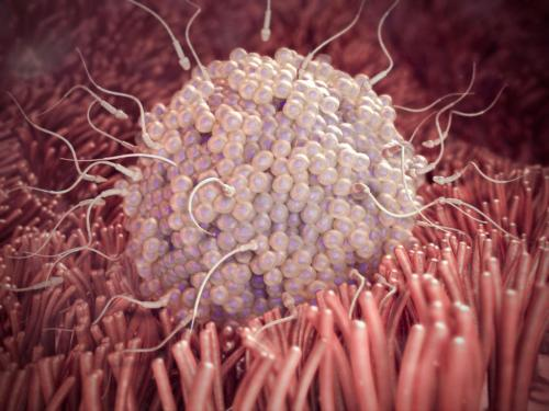 small resolution of fetal development diagram conception