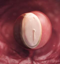 fetal development diagram one month [ 1024 x 768 Pixel ]