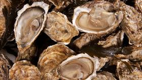 https://i0.wp.com/assets.bizjournals.com/seattle/news/Oysters*280.jpg