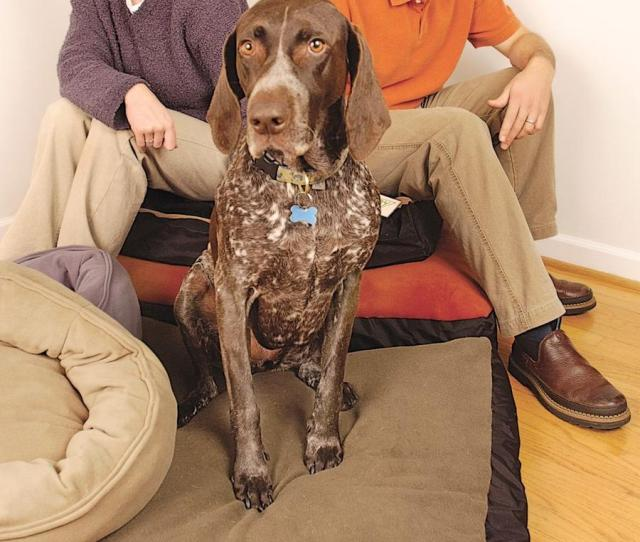 Cici And Bruce Kelling Shown With Their Dog Maggie Say Their Growing Business Is