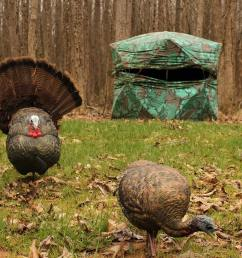 when and how to use a full strut turkey decoy [ 1920 x 1080 Pixel ]