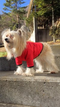 Dog down jacket  Sewing Projects | BurdaStyle.com