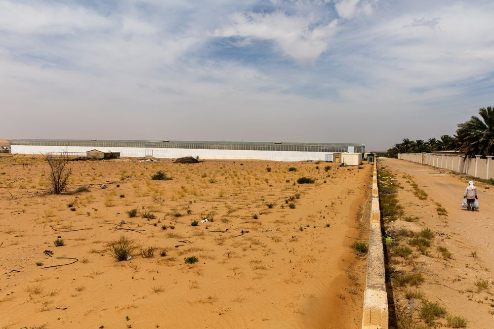 Uae To Grow More Food In The Desert As Pandemic Disrupts Imports Bloomberg