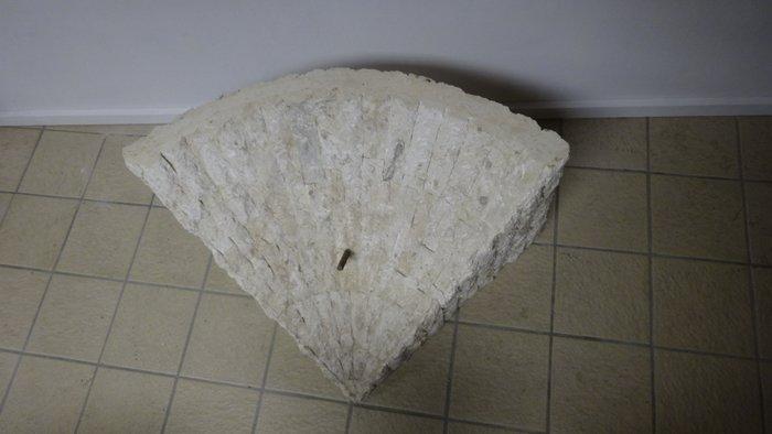 Fossiel  salontafel houtsteenglas  Catawiki