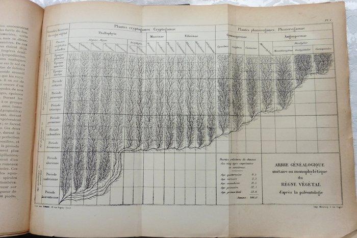 Albero evolutivo delle piante, Ernst Haeckel, 1870