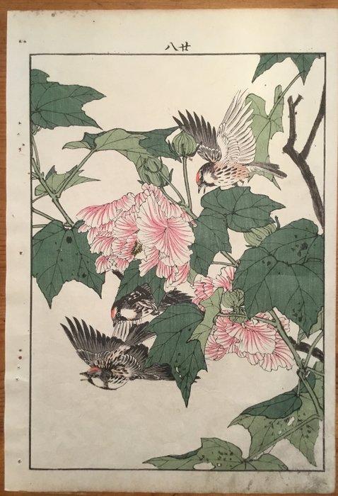 """Original woodblock print - Imao Keinen (1845-1924) - Een drietal barmsijsjes in een berghibiscus - Uit de serie """"Keinen Kacho Gafu"""" - 1891 - Japan - Catawiki"""