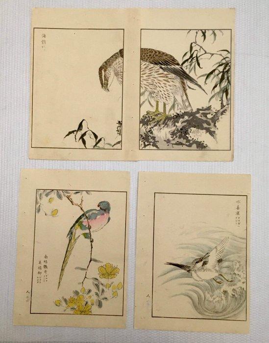 "Lot of original wood engravings (1 diptych and 2 simple) - Numata Kashū 沼田荷舟 (1838-1901) - ""Shūchō gafu"" 聚鳥画譜 (Album d'oiseaux variés) - 1885 - Japan - Catawiki"