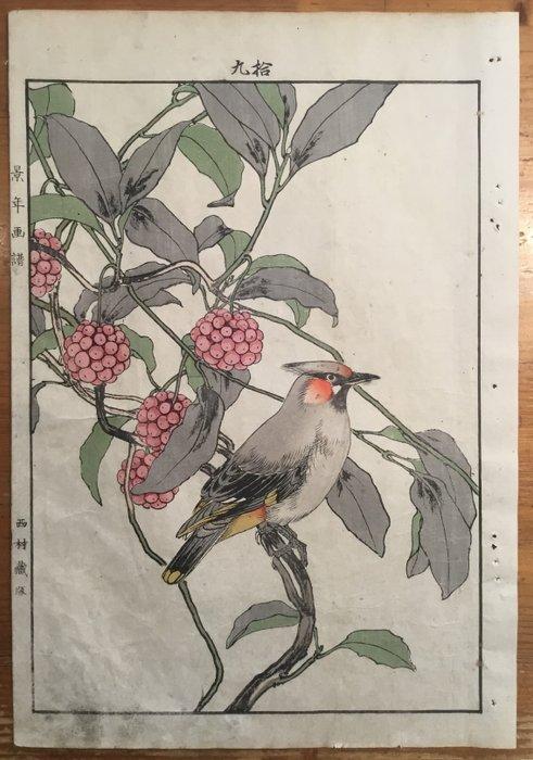 """Original woodblock print - Imao Keinen (1845-1924) - Ballonklokjes met een pestvogel - Uit de album """"Keinen kacho gafu"""" 景年花鳥画譜 - Japan - 1891 - Catawiki"""