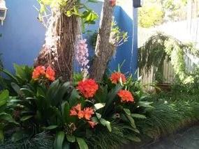 Plan to Plant  Garden Design Services  Brisbanes Best Garden Designs