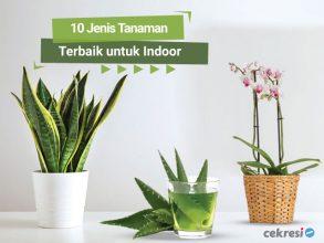 10 Jenis Tanaman Terbaik untuk Indoor
