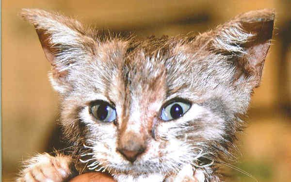Petition  A kitten named Cuddles died of torture PLEASE