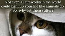Petition  BAN FIREWORKS IN RUSTENBURG COMPLETELY  Changeorg