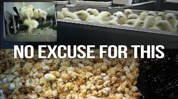 Petition  Prevent The Brutal Massacre of Thousands of