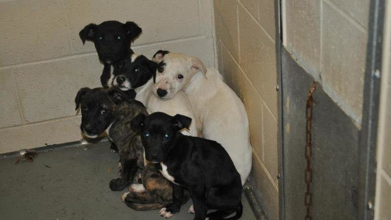 Petition Ban Heart Stick Killing Of Shelter Pets In All Georgia Animal Shelters Adopt No