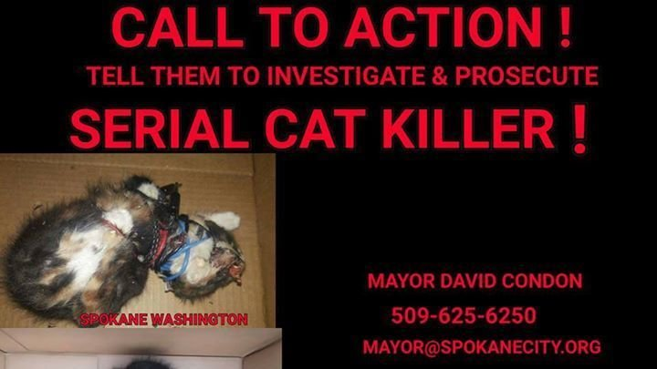 Petition  Contcting the right people in power there and petitioning them Stop serial cat