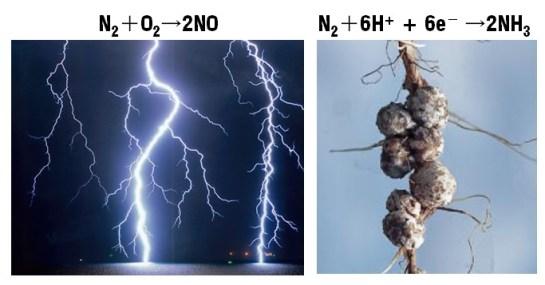 Nitrogenase-2