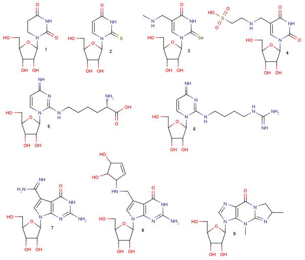 1:ジヒドロウラシル/2:チオウラシル/3:メチルアミノセレノウラシル/4:タウリノメチルウラシル 5:リジシン/6:アグマチニルシトシン/7:アーキオシン/8:キューオシン/9:ワイオシン