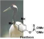 タンチョウ:殺虫剤フェンチオンで中毒死増加 | Chem-Station (ケムステ)