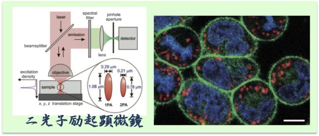 2光子励起顕微鏡
