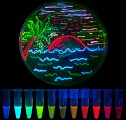 7色に光る蛍光タンパクシリーズ