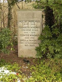 Windaus_1