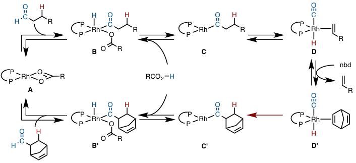 図5 想定されている反応機構