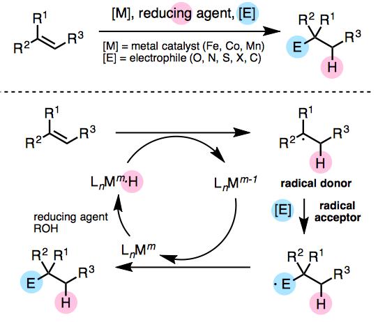 図1 金属触媒(Fe, Co, Mn)を用いたオレフィンのヒドロ官能基化