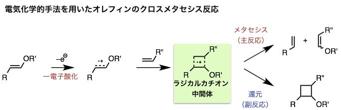 図2.電気化学的手法を用いたアルケンのクロスメタセシス反応 (論文より改変)