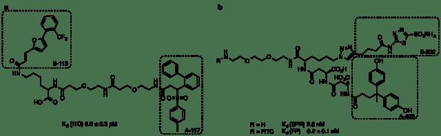 a)AGPと最もよく相互作用した組み合わせA-117/B-113をLys-エチレングリコールリンカーで接続した分子 b) CAIXと最も相互作用した化合物対をリンカーで接続した化合物