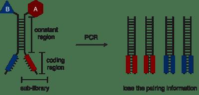 過去に報告されたDNAコード化した二分子ライブラリー法