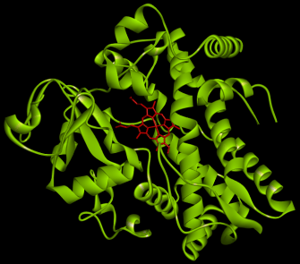 CYP3A4の構造 (赤がヘム鉄、PDB: 2J0D)