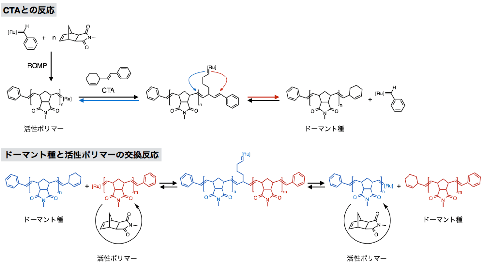 図5 catalytic living ROMPの反応機構