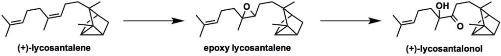 Lycosantalonol-scheme2