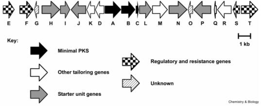 enterocin gene