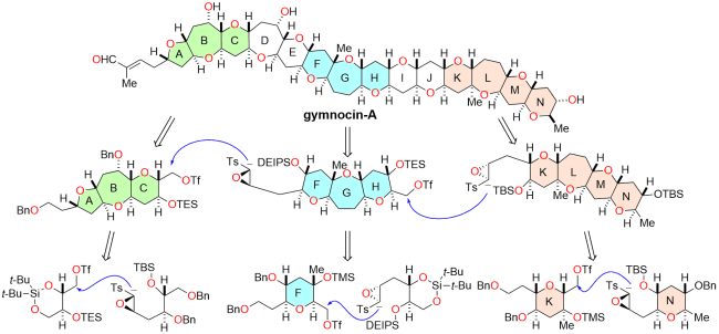 図:Gymnocin-Aの合成戦略