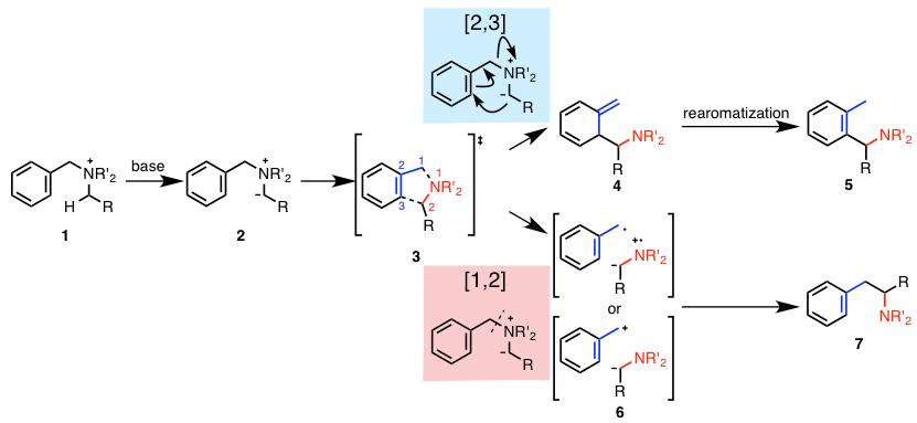 図1. アンモニウムイリドの2種類の転位反応
