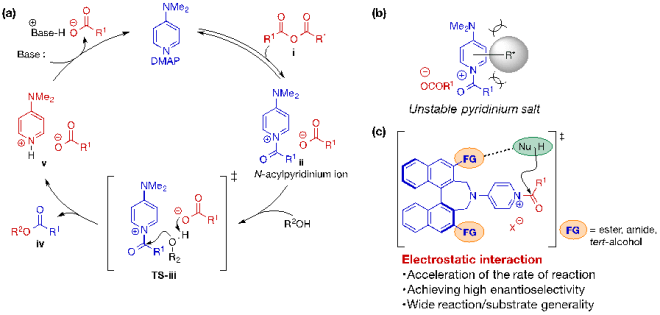図 1. (a) アルコールの触媒的アシル化反応の触媒サイクル (b) 不斉触媒化におけるN-アシルピリジニウムイオンの不安定化 (c) 静電的相互作用を活用する触媒の設計指針