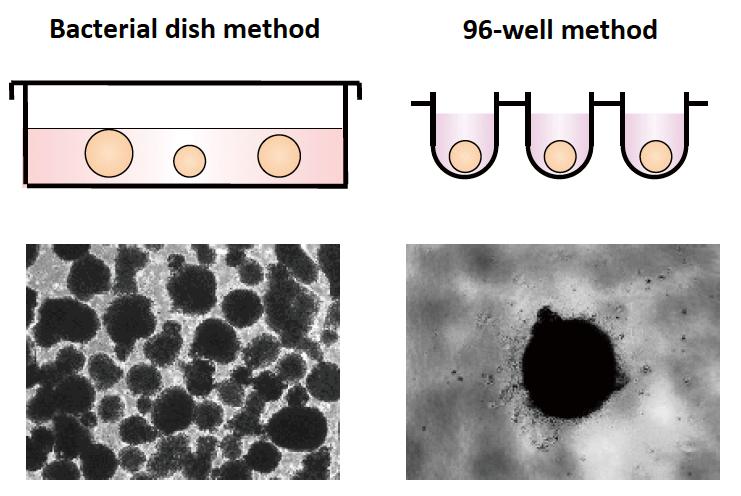 胚様体形成法:BD法と96-well法