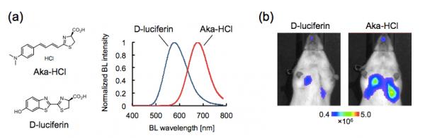 図1 (a) Aka-HClとD-luciferinの化学構造とFlucとの反応によって生成によってされる生物発光 (BL)スペクトル。(b) Flucを発現するがん細胞によって形成されたマウス肺転移の検出感度の比較。