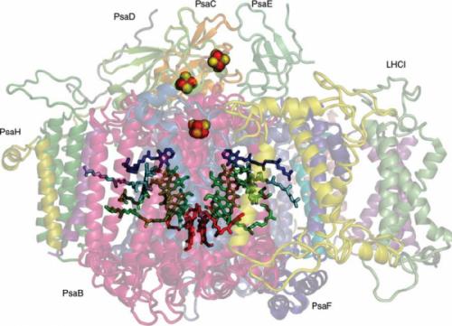 光合成系Iの結晶構造(論文[1b]より引用)
