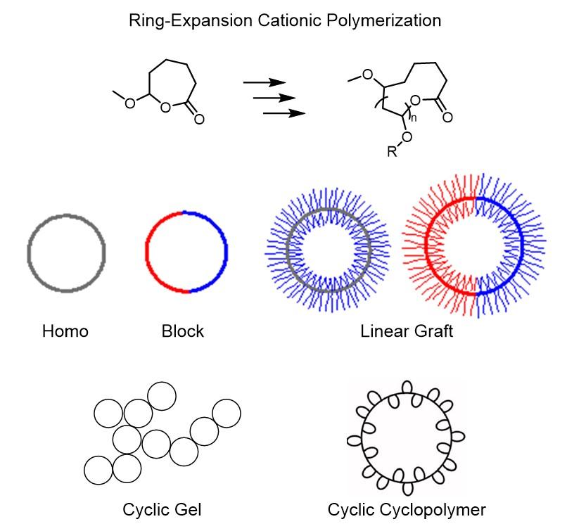 ビニルエーテルの環拡大リビングカチオン重合と、合成されたトポロジカルポリマー。