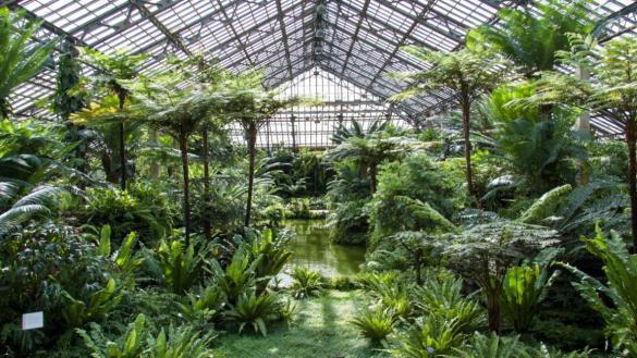 conservatories & greenhouse chicago
