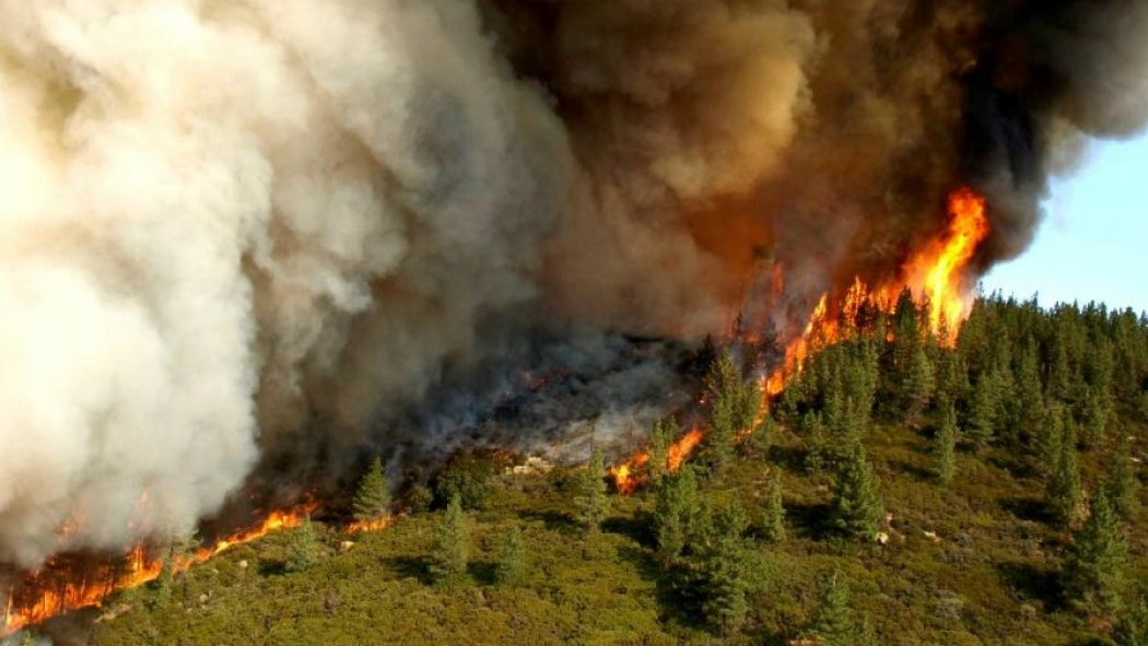 Restoring California's forests to reduce wildfire risks will take time, billions of dollars and a broad commitment