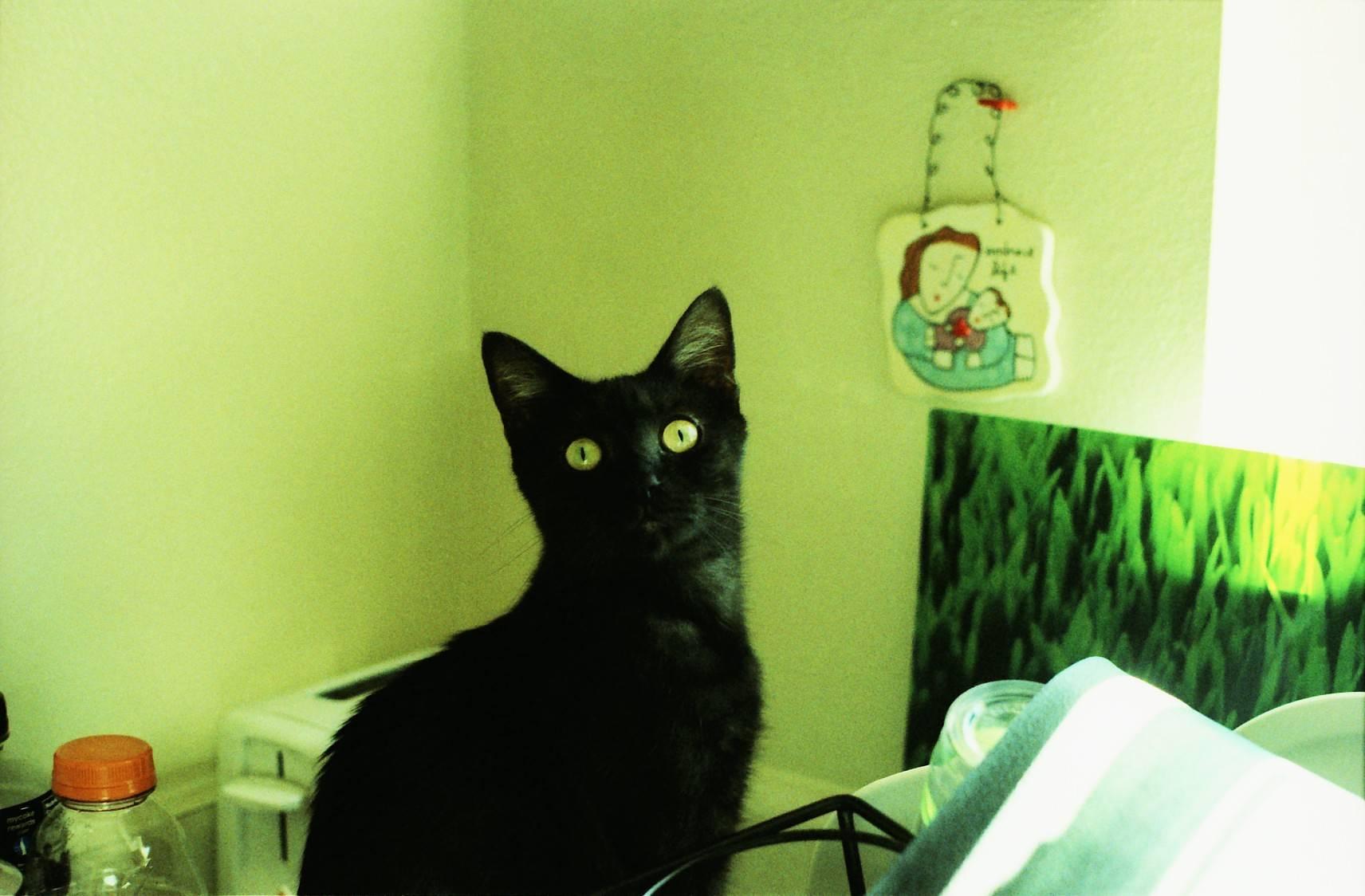 日本東京吉祥寺的 Calico 貓咖啡 · Lomography
